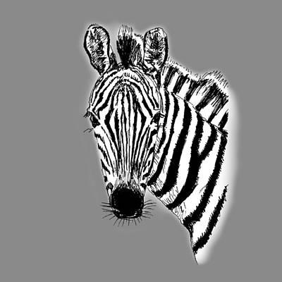 Drawing - Drawing Zebra by Masha Batkova