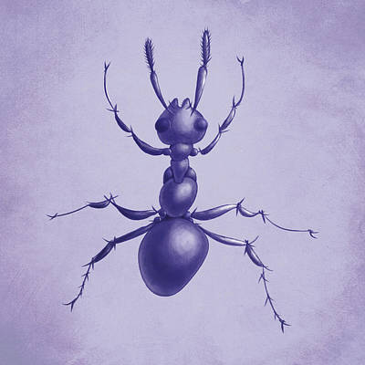 Bug Digital Art - Drawn Purple Ant by Boriana Giormova