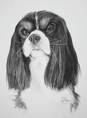 Drawing - Drayton by Rachel Hames