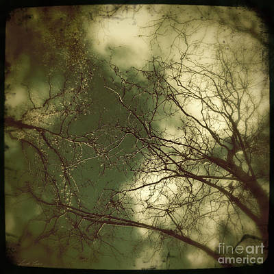 Photograph - Dream A Little Dream by Linda Lees
