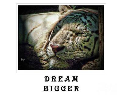 Photograph - Dream Bigger by Traci Cottingham