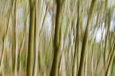 Photograph - Dream Forest 2 by Clare Bambers