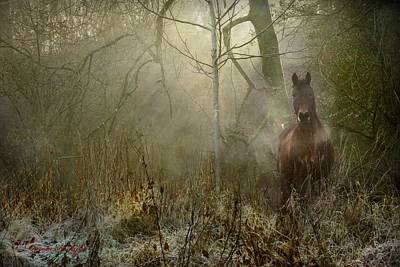 Riding Photograph - Dream Forest by Dorota Kudyba