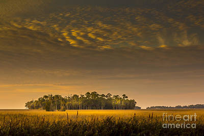 Palmetto Photograph - Dream Land by Marvin Spates