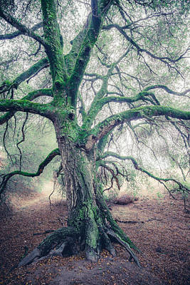 Photograph - Dream Oak 3b by Alexander Kunz