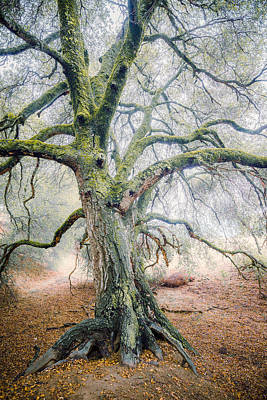 Photograph - Dream Oak IIia by Alexander Kunz