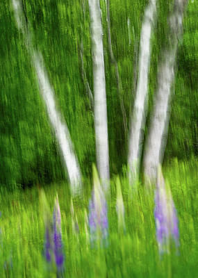 Photograph - Dream Of Lupines by Michael Blanchette