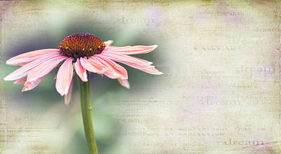 Cone Flower Photograph - Dream by Rebecca Cozart