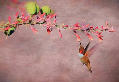 Rufous Wall Art - Photograph - Dreamin' In Pink by Donna Kennedy