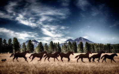 Photograph - Dreaming Of Horses by Cat Connor