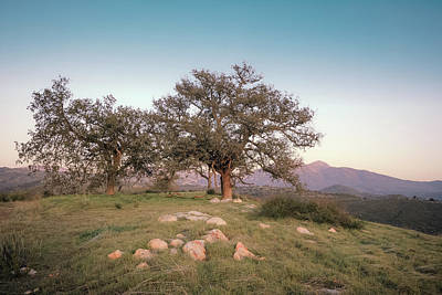 Photograph - Dreaming Oaks by Alexander Kunz