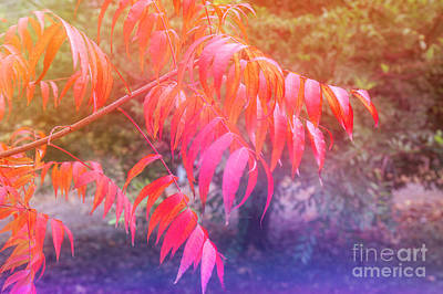Dreaming Of  Autumn Art Print by Elaine Teague