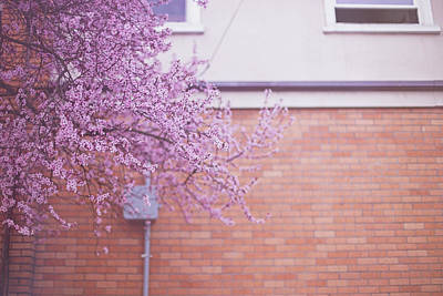 Photograph - Dreaming Of Blossoming by Kunal Mehra