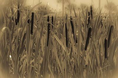 Dreaming Of Cattails Art Print