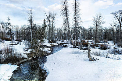 Photograph - Dreaming Of Cottonwood Creek by Belinda Greb