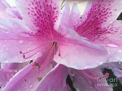 Photograph - Dreaming Of Lilies by Jenny Revitz Soper