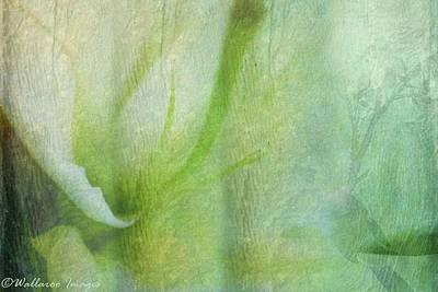 Photograph - Dreaming Of Lily by Wallaroo Images