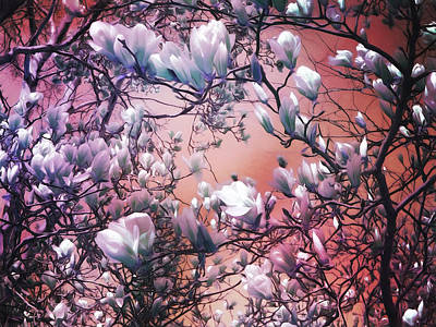 Early Spring Digital Art - Dreaming Of Magnolias by Shawna Rowe