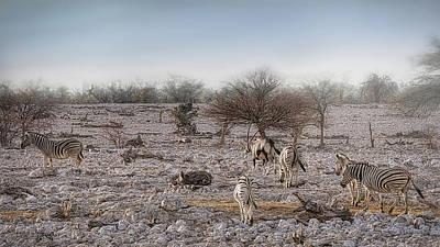 Photograph - Dreaming Of Namibian Safaris by Ernie Echols