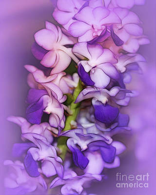 Photograph - Dreaming Of Orchids by Judi Bagwell