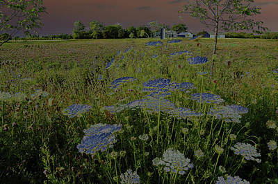 Photograph - Dreaming Of Queen Annes Lace by Suzanne Gaff