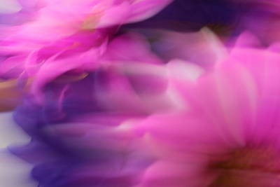 Photograph - Dreaming Of Spring by Carolyn Jacob
