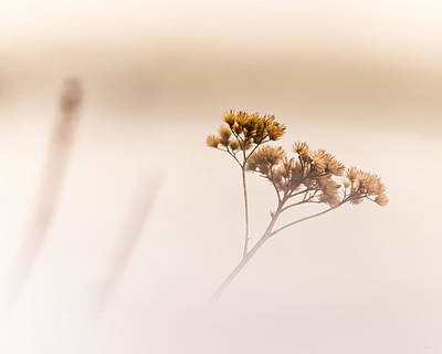 Photograph - Dreaming Of Spring by Donna Lee