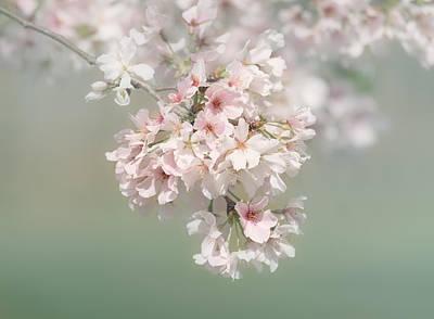 Photograph - Dreaming Of Spring by Kim Hojnacki