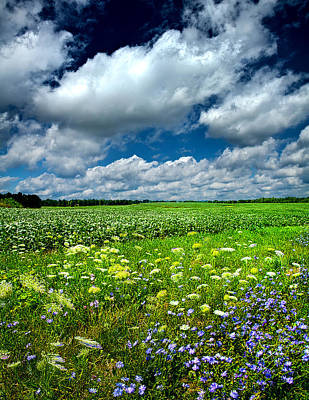 Spring Poster Photograph - Dreaming Of Summer by Phil Koch