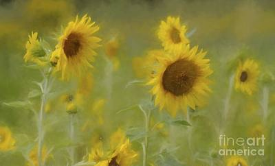 Photograph - Dreaming Of Sunflowers by Benanne Stiens