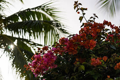 Photograph - Dreaming Of Tropical Gardens - Bougainvilleas And Palm Trees by Georgia Mizuleva