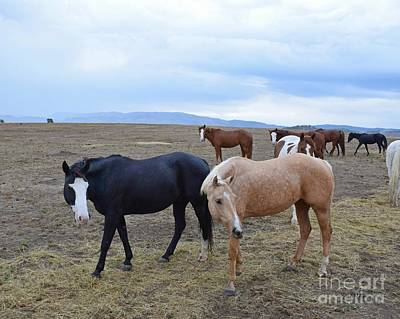 Photograph - Dreaming Of Wild Horses by Kathy M Krause