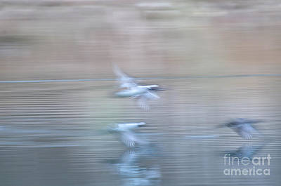 Photograph - Dreaming Of Wings Over Water by Amy Porter