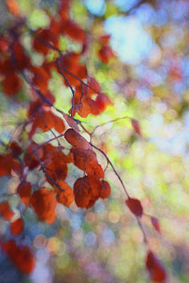Photograph - Dreaming On A Summer Day by Marnie Patchett