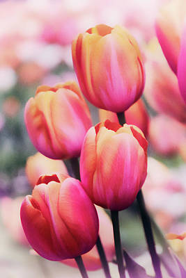Dreaming Tulips Art Print by Jessica Jenney