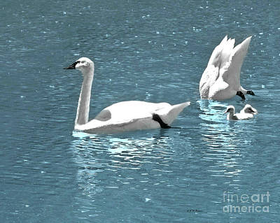 Photograph - Dreaming With Swans by Kathy M Krause