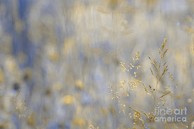 Photograph - Dreamland - 01-v2 Gold by Variance Collections