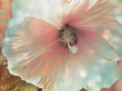 Photograph - Dreamlike Hibiscus by Shawna Rowe