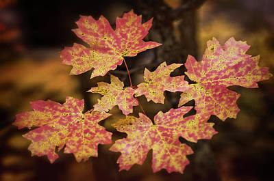 Photograph - Dreams Of Autumn  by Saija Lehtonen