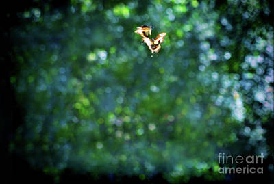 Photograph - Dreams Of Butterflies by Karen Adams