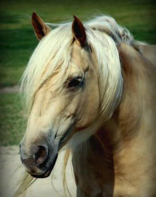 Horse Portrait Photograph - Dreams Of Honey by Karen Wiles