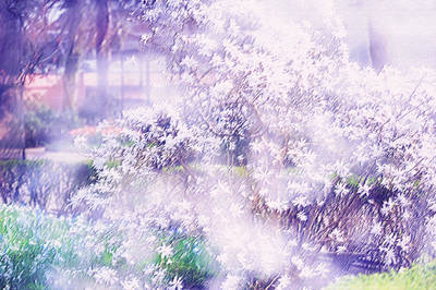 Photograph - Dreams Of Spring. Impressionism by Jenny Rainbow