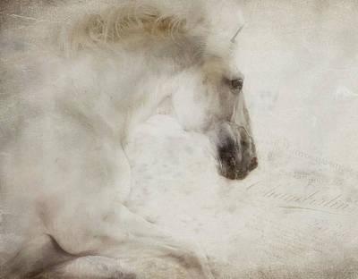 Latidude Image - Dreams by Pamela Steege