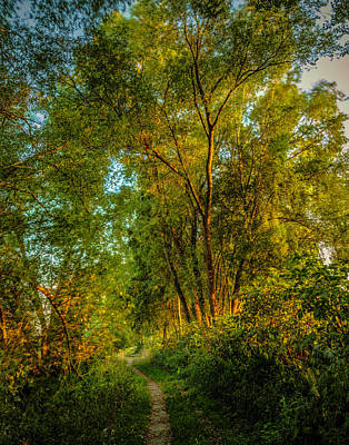 Photograph - Dreams Path #h7 by Leif Sohlman