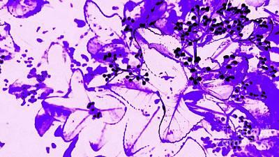 Digital Art - Dreams You Know by Rachel Hannah