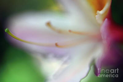 Photograph - Dreamscape Flowers - Azalea 10 by Terry Elniski