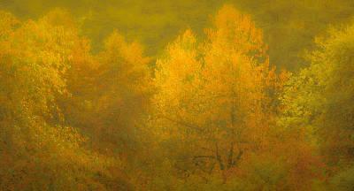 Photograph - Dreamy Autumn by Don Schwartz