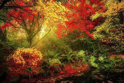 Photograph - Dreamy Autumn by Mihai Andritoiu
