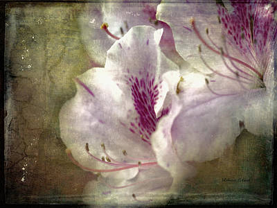 Photograph - Dreamy Azaleas by Bellesouth Studio