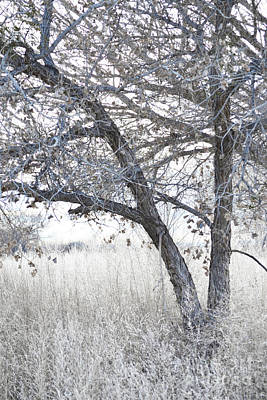 Photograph - Dreamy Bosque Tree by Andrea Hazel Ihlefeld